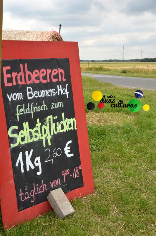 EDC_Alemanha_Morango1