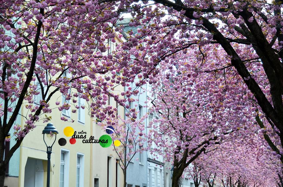 EDC_Cerejeiras_Alemanha_1